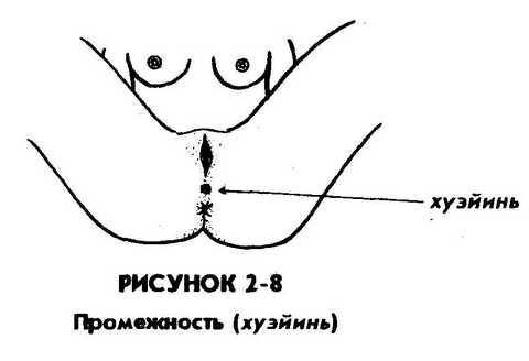 kak-osmatrivat-muzhskie-polovie-organi